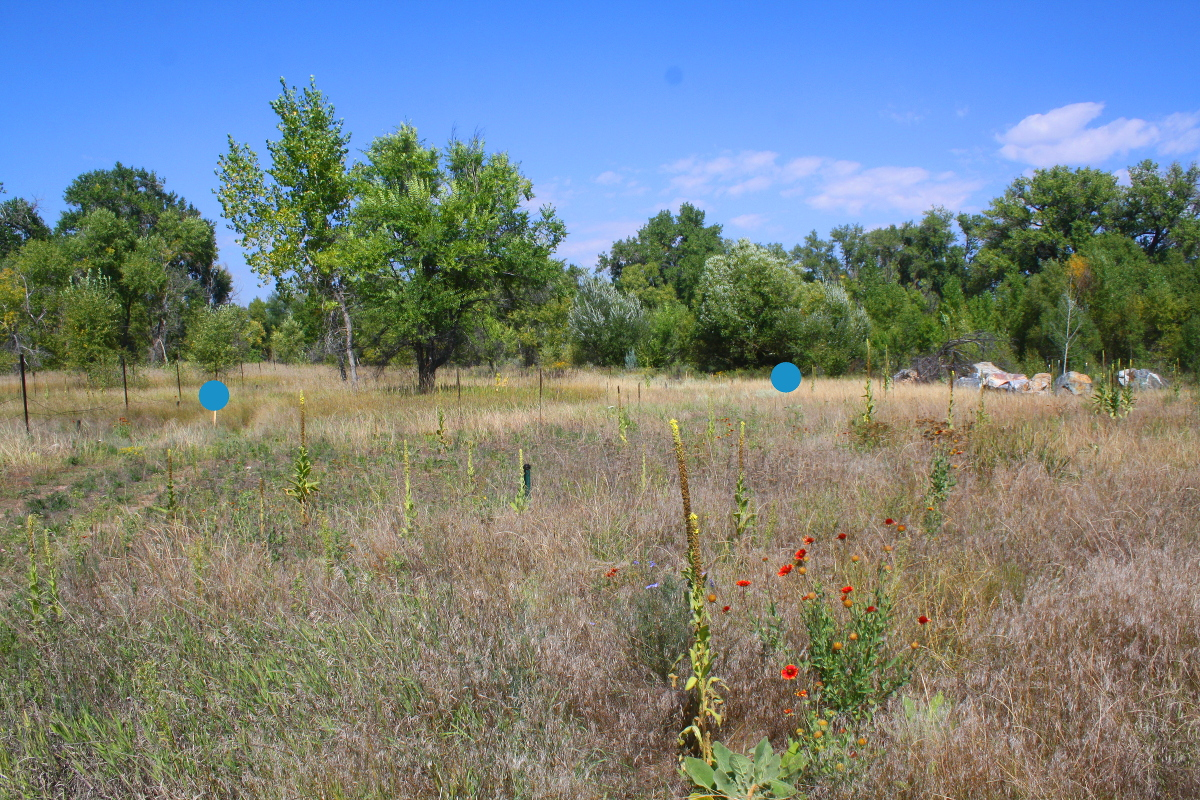 The blue dots highlight where the surveyor's markers are standing on the Brinks property.