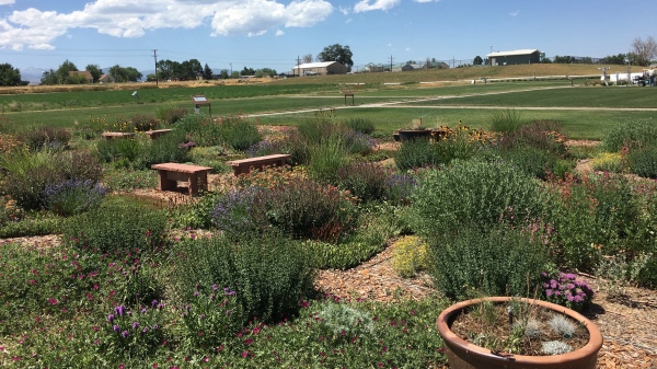 Gardens that have been watered in varying amounts.