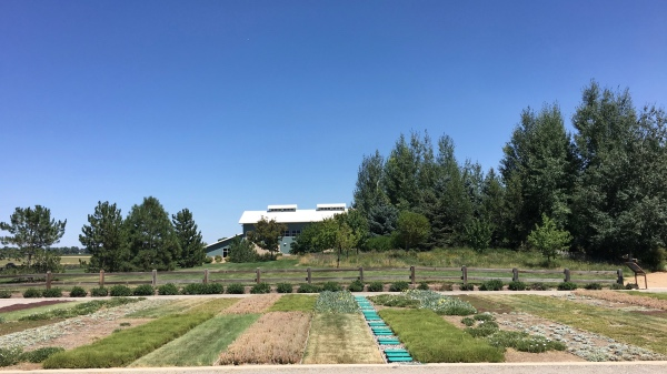 Another test garden with the Northern Water building in the background.
